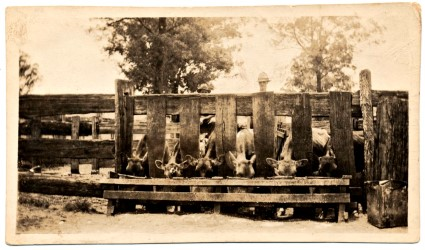 Slab built feeding stalls ca 1900